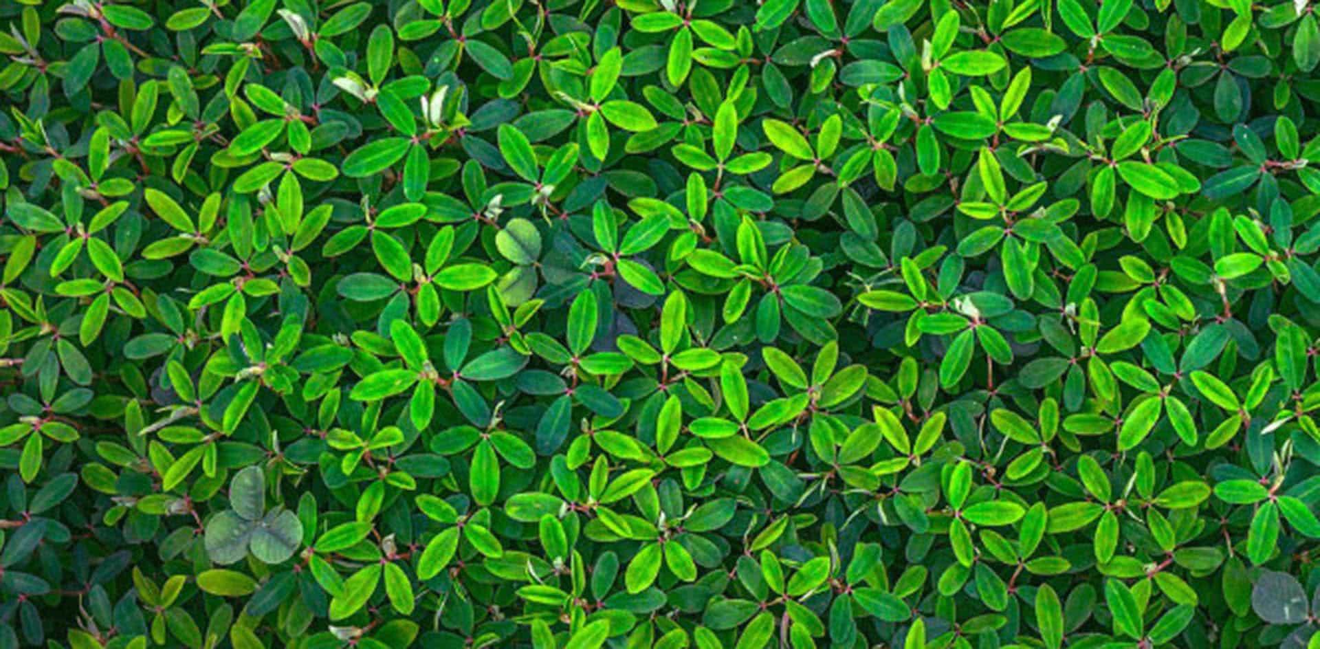 Cuando las plantas charlan