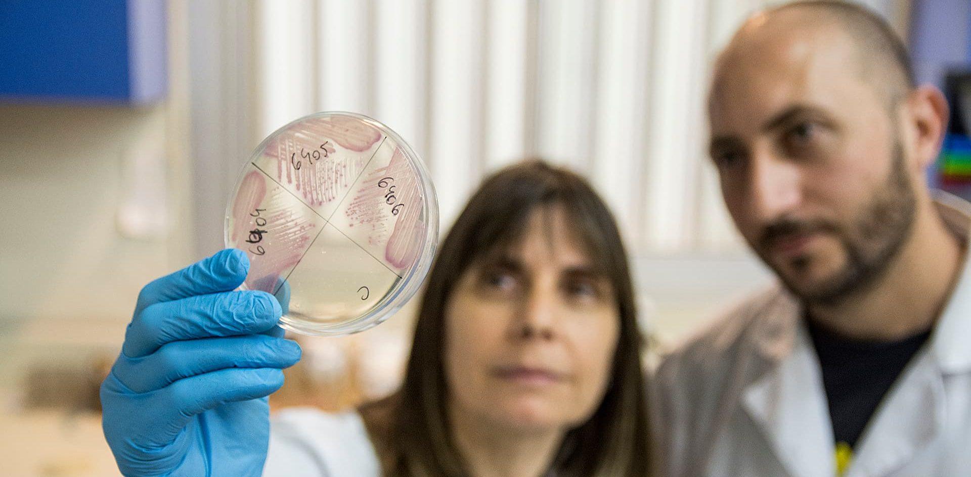 Detectan bacterias multirresistentes a los antibióticos en el río Suquía y en el ambiente de Córdoba