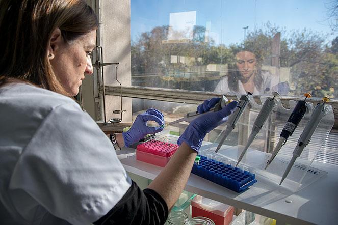 Ximena Kiguen, preparando muestras en el Instituto de Virología de la UNC.