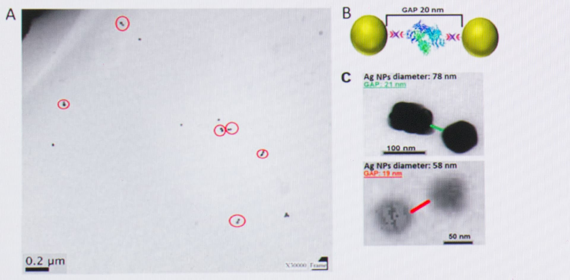 Desarrollarán un test rápido de coronavirus con nanopartículas de plata