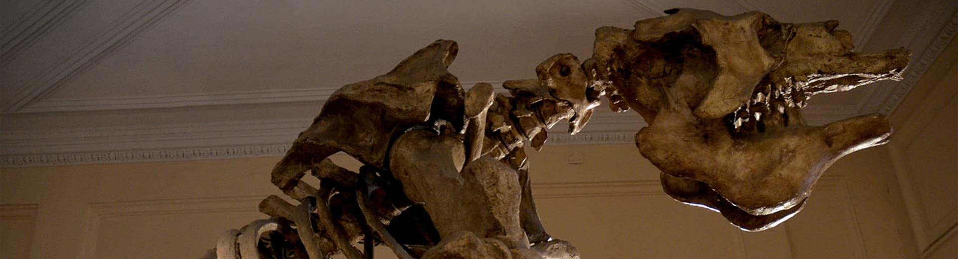 Los sonidos del Pleistoceno