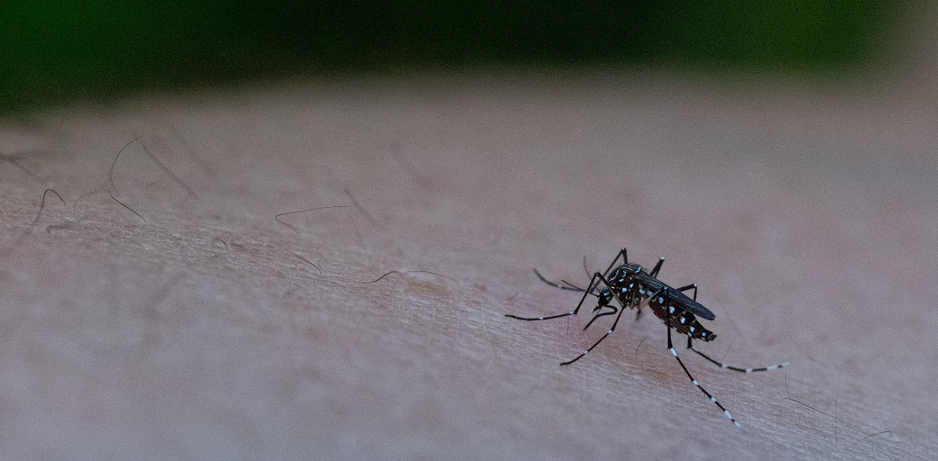En nueve años, casi se triplicó el número de viviendas con mosquitos transmisores del dengue