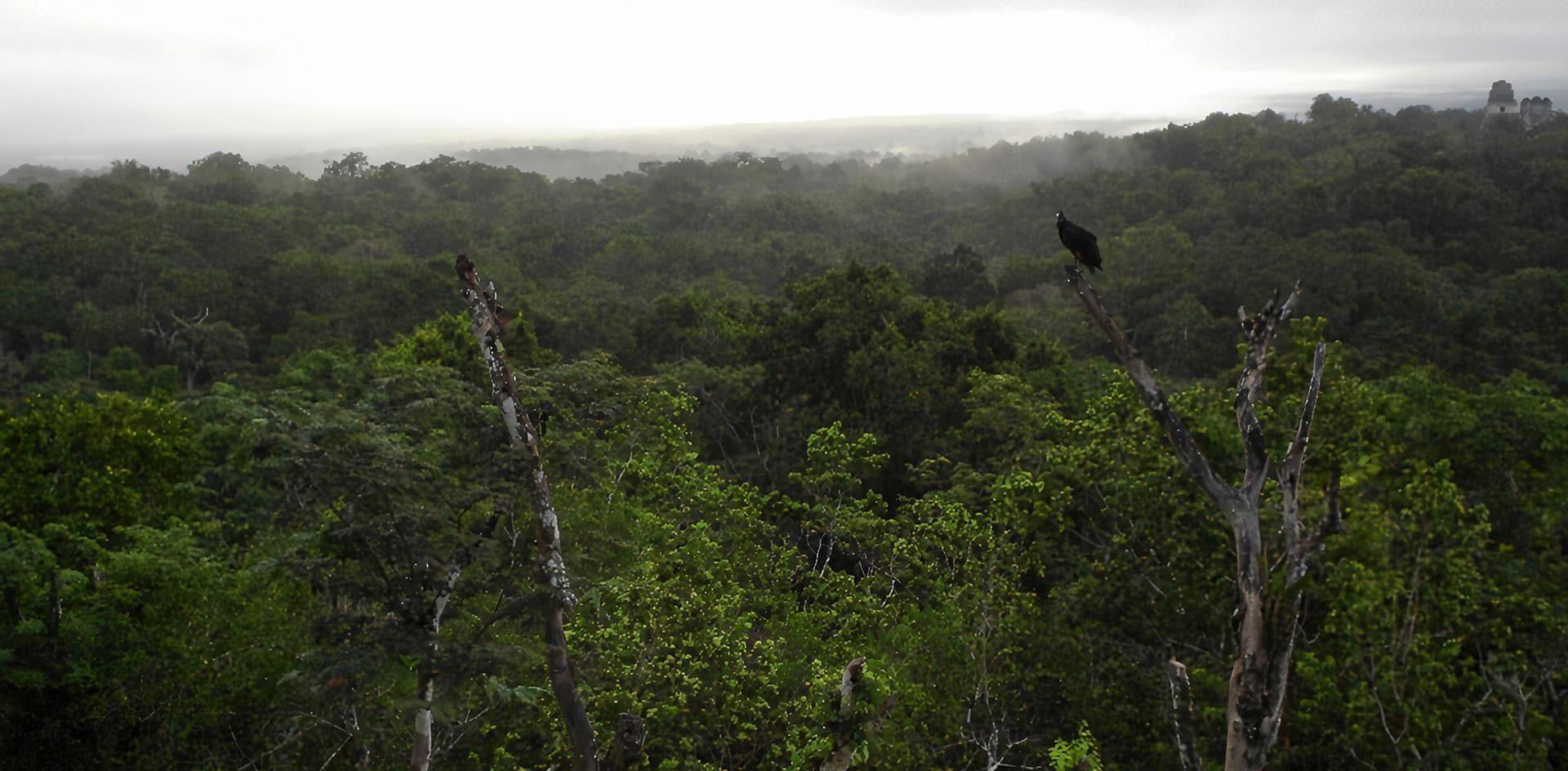 Reclaman una perspectiva pluralista en la concepción de la biodiversidad para avanzar en su conservación