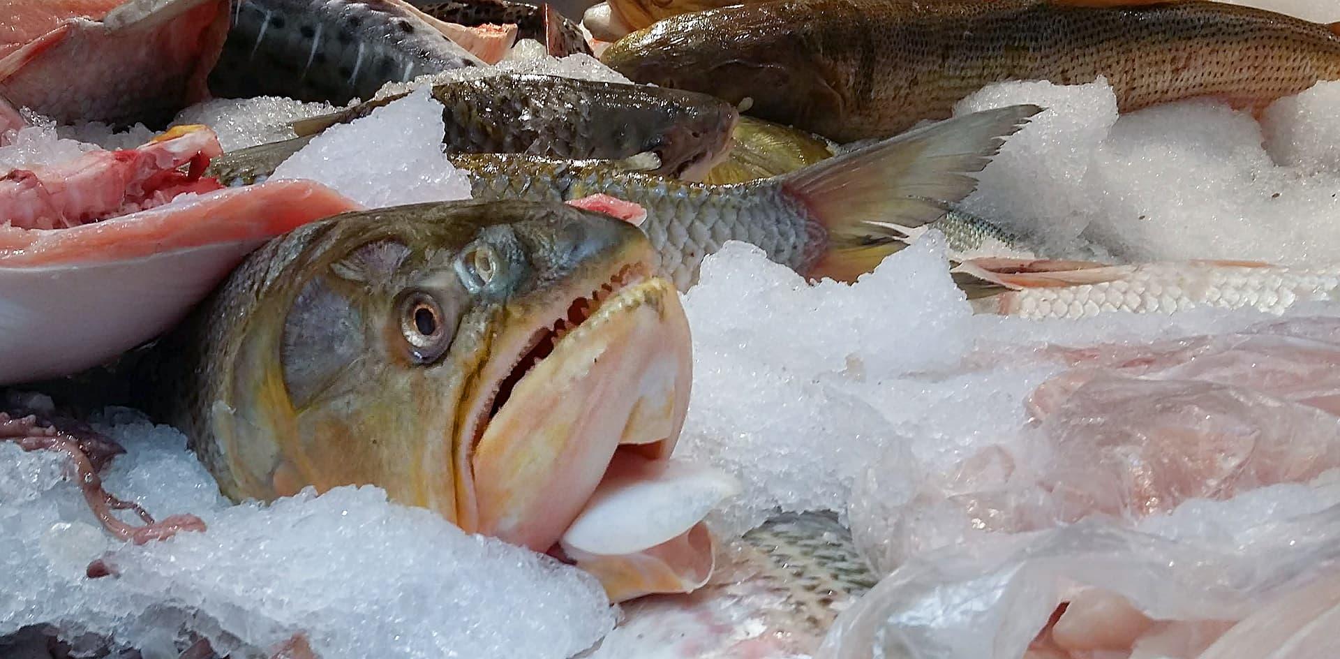 Hallan un cóctel de antibióticos en peces que se venden para consumo en Córdoba