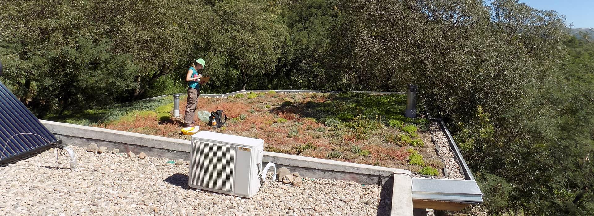 Imagen   Cómo lograr cubiertas verdes más sustentables