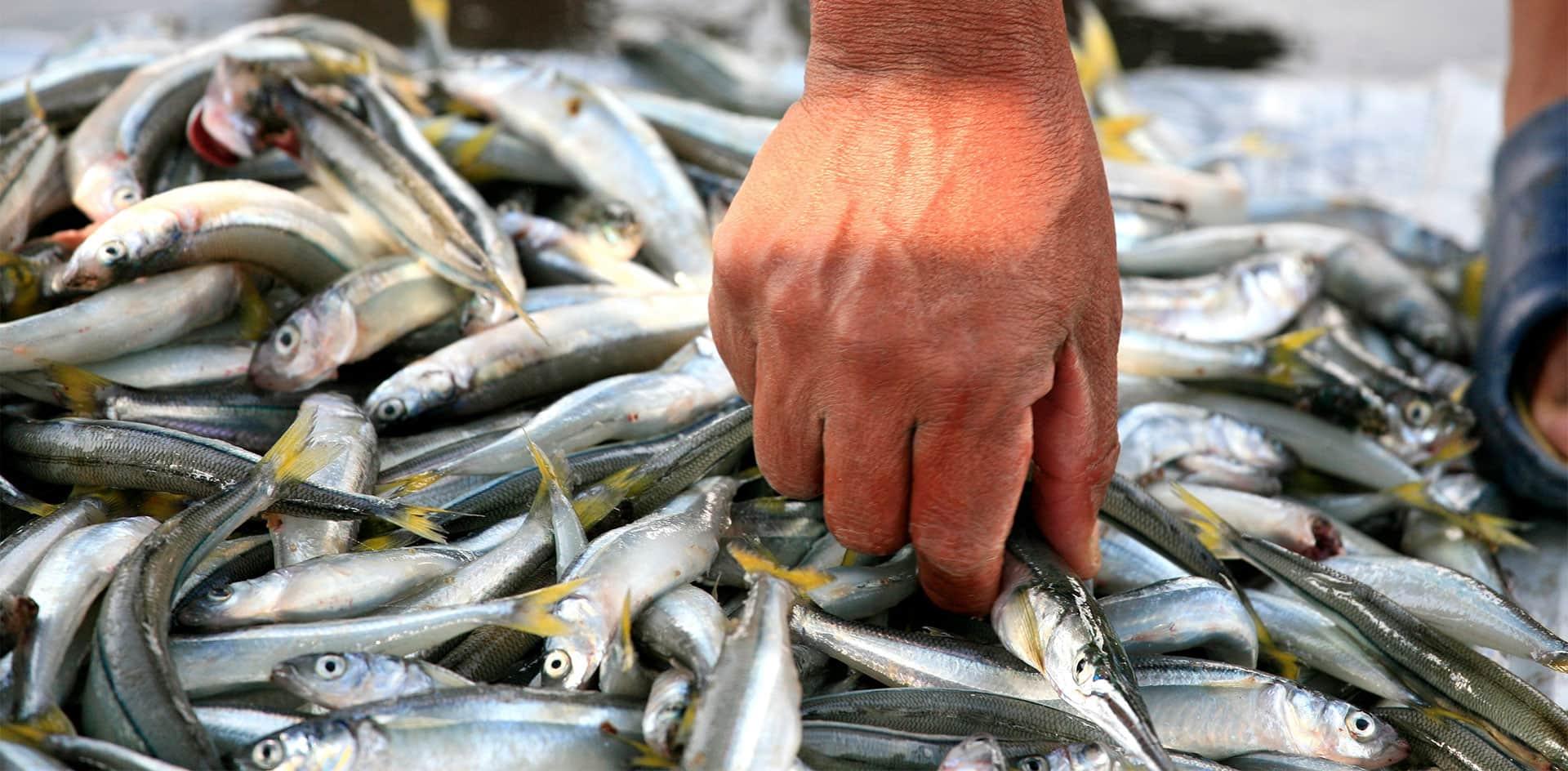 Las concentraciones de mercurio y arsénico en peces del embalse Río Tercero podrían afectar la salud de quienes los consumen