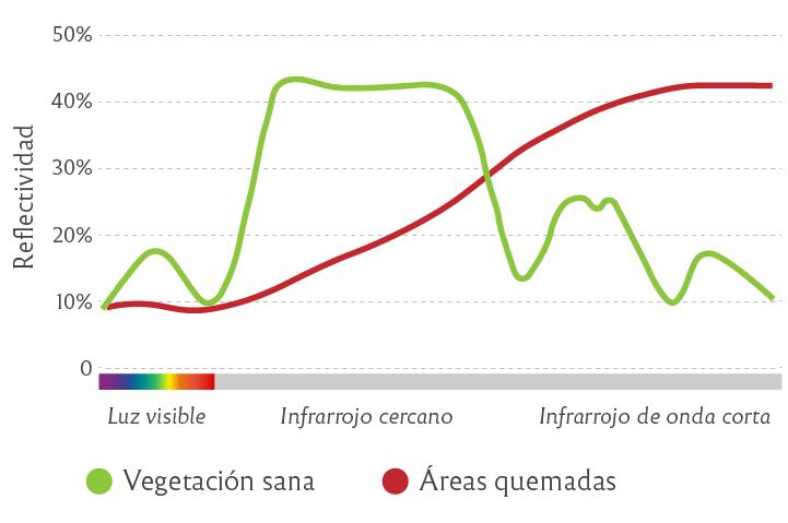 Firma espectral de vegetación sana y áreas quemadas
