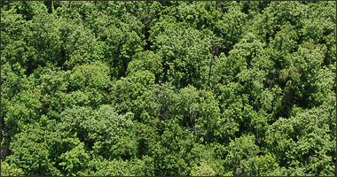 Crean base mundial de plantas para investigar biodiversidad y cambio climático