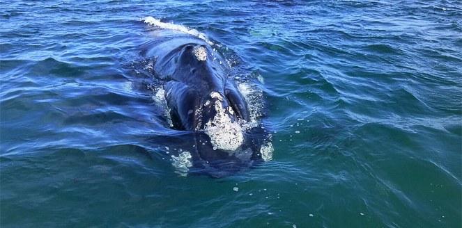 Documental de la UNC sobre la ballena franca austral ganó primer premio en Cinecien