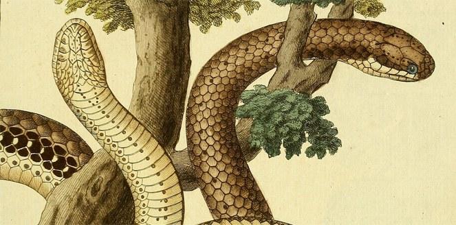 Mitos sobre las serpientes