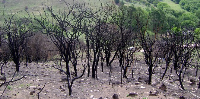 Crean recurso para revalorizar la flora de zonas incendiadas de Córdoba