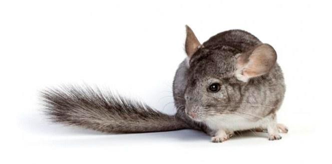 Estudian mamíferos con un técnica no invasiva y brindan un servicio exclusivo en América Latina
